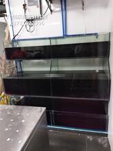 南海玻璃魚池定做價格 馬賽克海鮮池 東坦海鮮池定做圖片