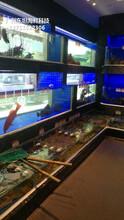 廣州南沙海鮮魚缸廠家 海鮮魚缸 梯形魚池土建魚池圖片