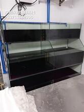順德定做玻璃魚池 生猛海鮮魚池圖片