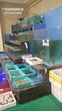 中山海鮮池怎么打膠 玻璃海鮮池 梯形魚池土建魚池圖片