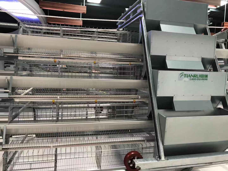 重慶9TLD 系列階梯式蛋雞設備