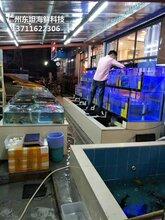 广州天河海鲜鱼缸怎么做 海鲜鱼缸 梯形鱼池土建鱼池