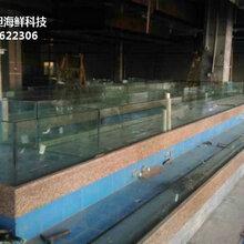 东莞桥头海鲜鱼缸效果图 不锈钢海鲜池