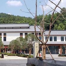 上海彩钢琉璃瓦YX30-200-800型 彩钢琉璃瓦 现货现供图片
