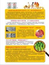 吉林禽专用的微生态饲料添加剂厂家 欢迎来电洽谈