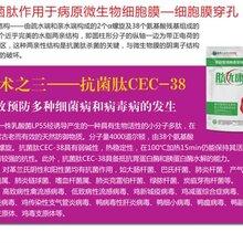 杭州替代饲用抗生素必选肽优康批发价 肽优康 欢迎咨询
