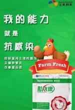武汉替代饲用抗生素肽优康批发价 宝来利来怎么样
