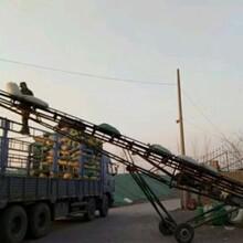 柳州找坡陶粒定制 供貨及時圖片