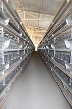 福建自動化蛋雞養殖設備價格田瑞牧業全自動養雞設備圖片
