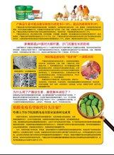鞍山宝来利来产酶益生素提高饲料转化调节肠道经销商图片