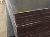臨夏竹膠板-超值的清水模板奇億工貿供應