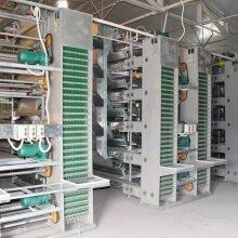 廣西階梯式養雞系統價格田瑞牧業智能養雞設備圖片