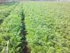 欽州節水灌溉系統安裝-新款南寧滴灌管推薦
