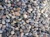 井冈山鹅卵石的价格 认准佳亿石材 规格齐全