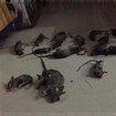 湖南泰韵达灭鼠灭蟑服务优质服务图片