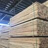 大连建筑木方批发市场
