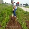 廠家供應背負式鋤草機多用割草松土旋耕機鴻睿新款去草根鋤草機