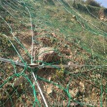 GPS2型主动防护网价格缆瑞钢丝绳防护网图片