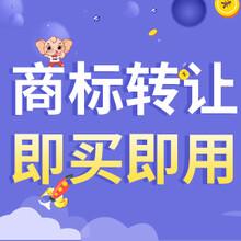 广州新款商标转让 商标交易 品牌效应图片
