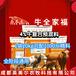 牛飼料批發繁殖母牛用的飼料廠家直銷,犢牛飼料
