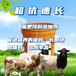 英美爾牛羊飼料添加劑,無抗飼料添加劑羊飼料添加劑批發代理