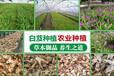 白芨種植前景和收益,白芨種植技術