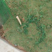 山东三维植被网 土工网垫 价�砦�θ猩礁裼呕萃计�