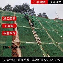 三维植被网 三维植草网 价�e格优惠图片