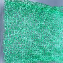 三维植被网价格 绿化植被网 10mm图片