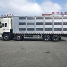 东风天龙种猪运输车,耐磨东风天龙9.6米畜禽运输车性能可靠图片
