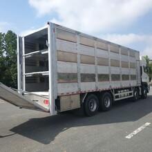 东风天龙猪苗运输车,生产东风天龙9.6米畜禽运输车样式优雅图片