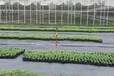 廠家直銷PP果園防草布農用除草布的使用年限