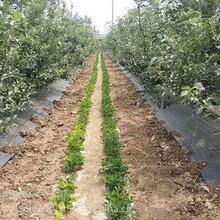 德州潤澤蓋草布,重慶防草布放心省心圖片