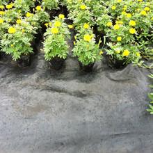 武夷山防草布質量可靠,除草布圖片