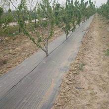 德州潤澤園藝地布,廣元德州潤澤防草布圖片