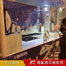 衡陽海洋生物展覽出租咨詢 房地產樓盤活動