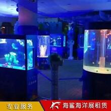 天門海洋生物展覽服務咨詢 水母鯊魚展 海獅表演