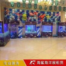 衡陽海獅表演一場價格 咨詢廠家