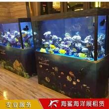 常德海獅海豹表演價格 商場樓盤活動承接