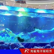 益陽海洋魚缸展出租 美人魚企鵝表演價格