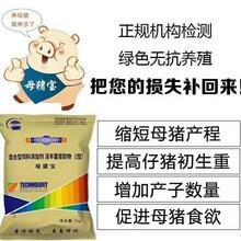 天津母畜必備費用 母豬縮短產程的方法 廠家直銷圖片
