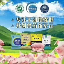 武漢母畜必備品牌 提高母豬生殖功能的方法 優質產品圖片