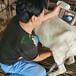 高清羊用B超機A10總代直銷,羊用小型b超