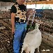 福榮萊母羊B超測孕儀,羊用B超機A10款式齊全