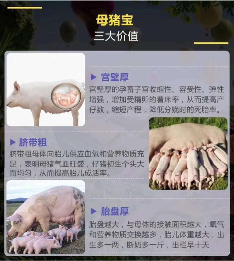 常州母畜定制