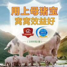 無錫母畜必備定制 促進泌乳 廠家直銷圖片