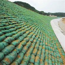 安陽綠色生態袋款式齊全圖片