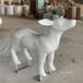 江門玻璃鋼動物雕塑樣式優雅,動物雕塑廠家