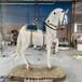 名圖玻璃鋼雕塑動物雕塑廠家,佛山玻璃鋼動物雕塑品種繁多