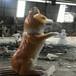 陽江玻璃鋼動物雕塑服務周到,玻璃鋼動物造型